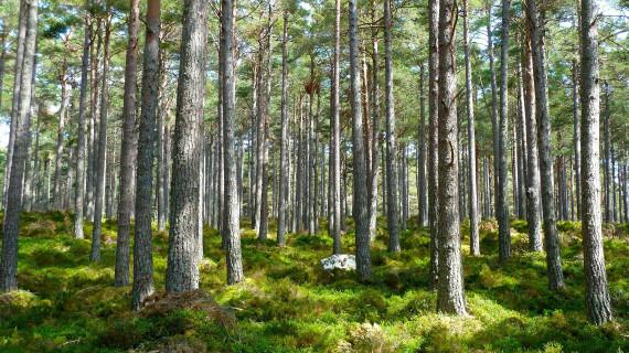 Poziv na radionicu za potencijalne korisnike iz mjere 8 Ulaganja u razvoj šumskih područja i poboljšanje održivosti šuma