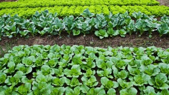 Sustavi kvalitete za poljoprivredne proizvode i hranu