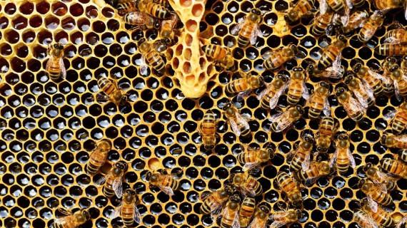 Stručna edukacija za pčelare: Dobra pčelarska praksa – Izazovi modernog pčelarenja